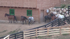 Six frightened horses in corral, herd of domestic animals, farm, stable, Stock Footage