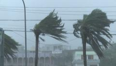 Hurricane Winds Thrash Palm Trees - stock footage