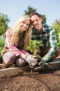 Happy young couple planting a shrub - stock photo