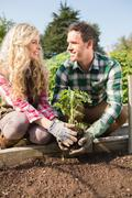 Smiling young couple planting a shrub - stock photo