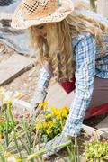 Blonde woman planting yellow flowers - stock photo