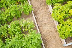 Overhead of a well kept garden - stock photo