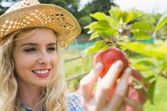 Young blonde picking an apple from a tree Stock Photos