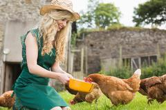 Young blonde feeding her chickens - stock photo