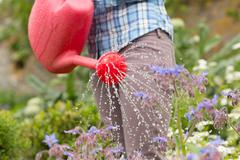 Woman watering her flowers with red watering can Stock Photos