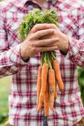 Farmer holding bunch of organic carrots - stock photo