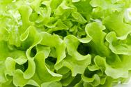 Stock Photo of Lettuce