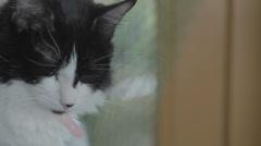 Sleepy Cat 2 Stock Footage