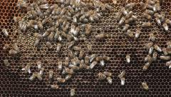 Honeycomb - stock footage