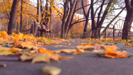 Stock Video Footage of autumnal alley