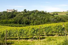 langhe, vineyards - stock photo