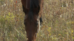 beautiful brown horse CU - stock footage
