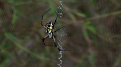Garden spider in his web Stock Footage