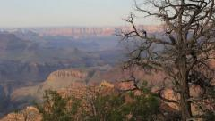Grand Canyon to Old Tree Pan Right Stock Footage