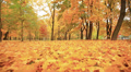 Beautiful golden  autumn landscape. Stabilized  animal view HD Footage
