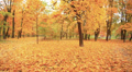 Beautiful golden  autumn landscape. Stabilized clip HD Footage