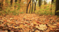 movement over leaves. Autumn. Stabilized slow motion clip Footage
