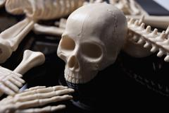 Toy skull among scattered toy skeletal body parts - stock photo