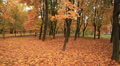 Walk on autumn park. Stabilized clip HD Footage