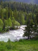 altai river - stock photo