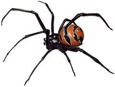 Black Widow Spider Stock Illustration