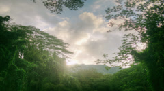 Tropical Rain forest, Banyan Tree Canopy, Jungle, Hawaii, Time Lapse Stock Footage