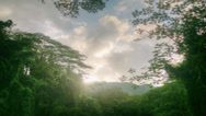 Stock Video Footage of Tropical Rain forest, Banyan Tree Canopy, Jungle, Hawaii, Time Lapse