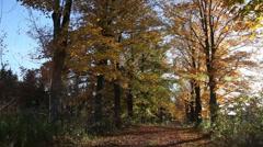 Autumn laneway Stock Footage