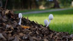 Mushrooms under tree Stock Footage
