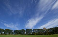 A row of coniferous trees and a blue sky with wispy clouds. Stock Photos