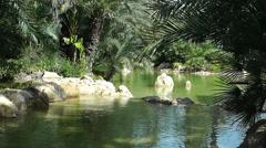 Mediterranean Palm Tree Garden 1 Stock Footage