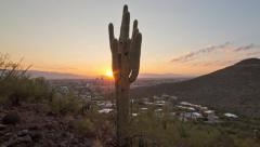Tucson Cactus southwest timelapse Stock Footage