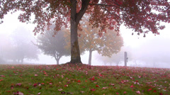 Autumn trees in the fog 3 Stock Footage