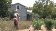 Scarecrows Stock Footage