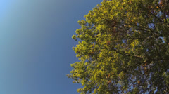 Driving under fall tree canopy on a bright sunny day - stock footage