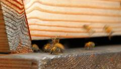 Bees Sequence - stock footage