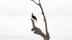 Birds Ground Hornbill Sequence - stock footage