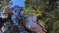 Driving under fall tree canopy on a bright sunny day Stock Footage