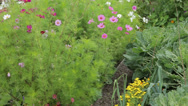 Stock Video Footage of flower and vegetable garden