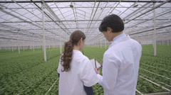 Male and female Scientist examining plant and using Digital tablet in greenhouse Stock Footage