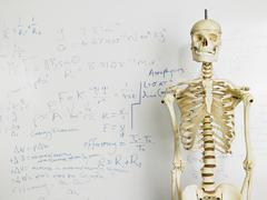 Skeleton In Front Of Whiteboard - stock photo