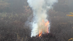 Smoke and fire near the forest - danger of forest fire 2 Stock Footage