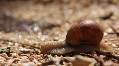 Crawling land snail Stock Footage