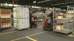 Flower market auction distribution centre Stock Footage