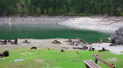 Field of Tree stumps near lake on a grass Stock Footage