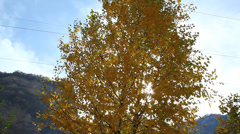 Yellow autumn birch shakes wind and the sun shines through the leaves Stock Footage