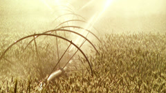 Agriculture Sprinkler in Golden Afternoon Light Waters Wheat Crop in Oregon Stock Footage