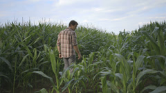 Father and son in field Stock Footage