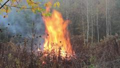Danger of forest fire - unattended fire near the forest. Stock Footage
