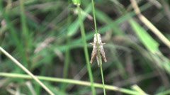 Stock Video Footage of A comical grasshopper